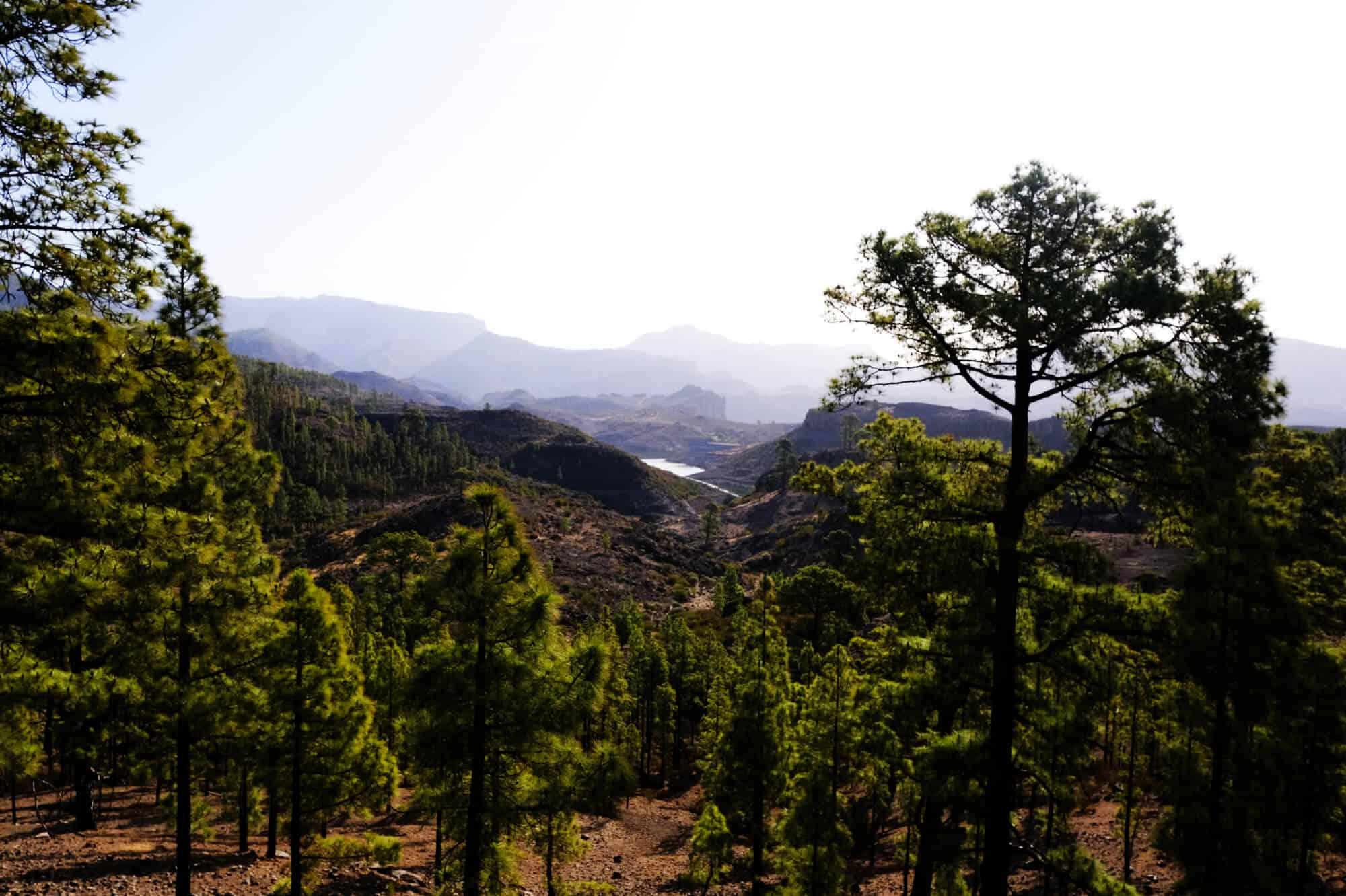 Waldlandschaft mit Stausee