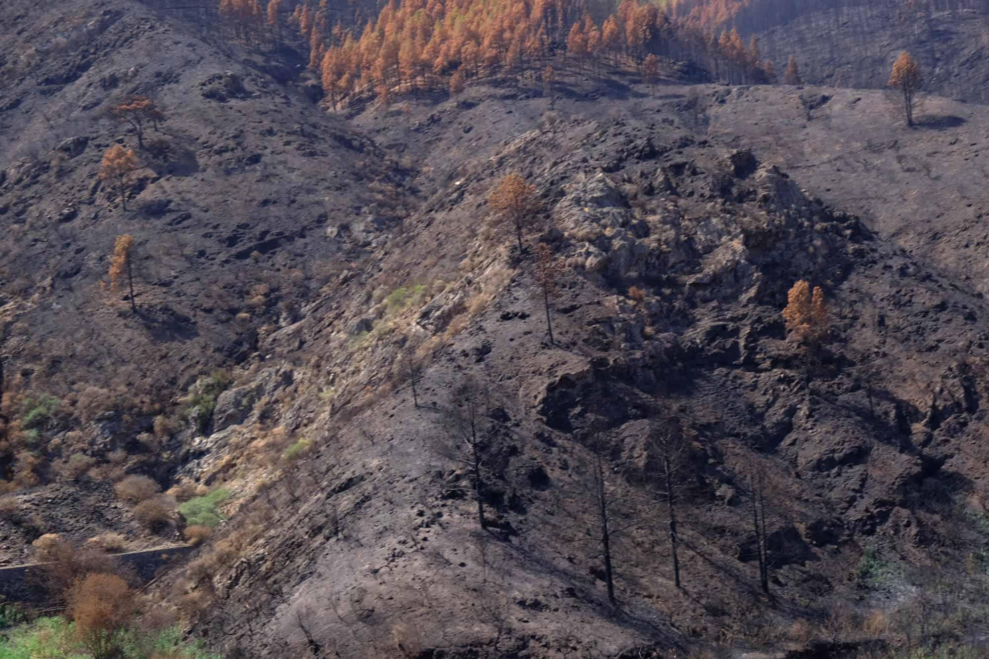 Verbrannter Wald auf Gran Canaria