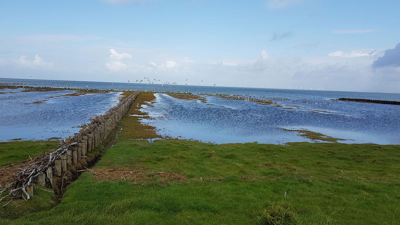Vogelschutzgebiet Föhr