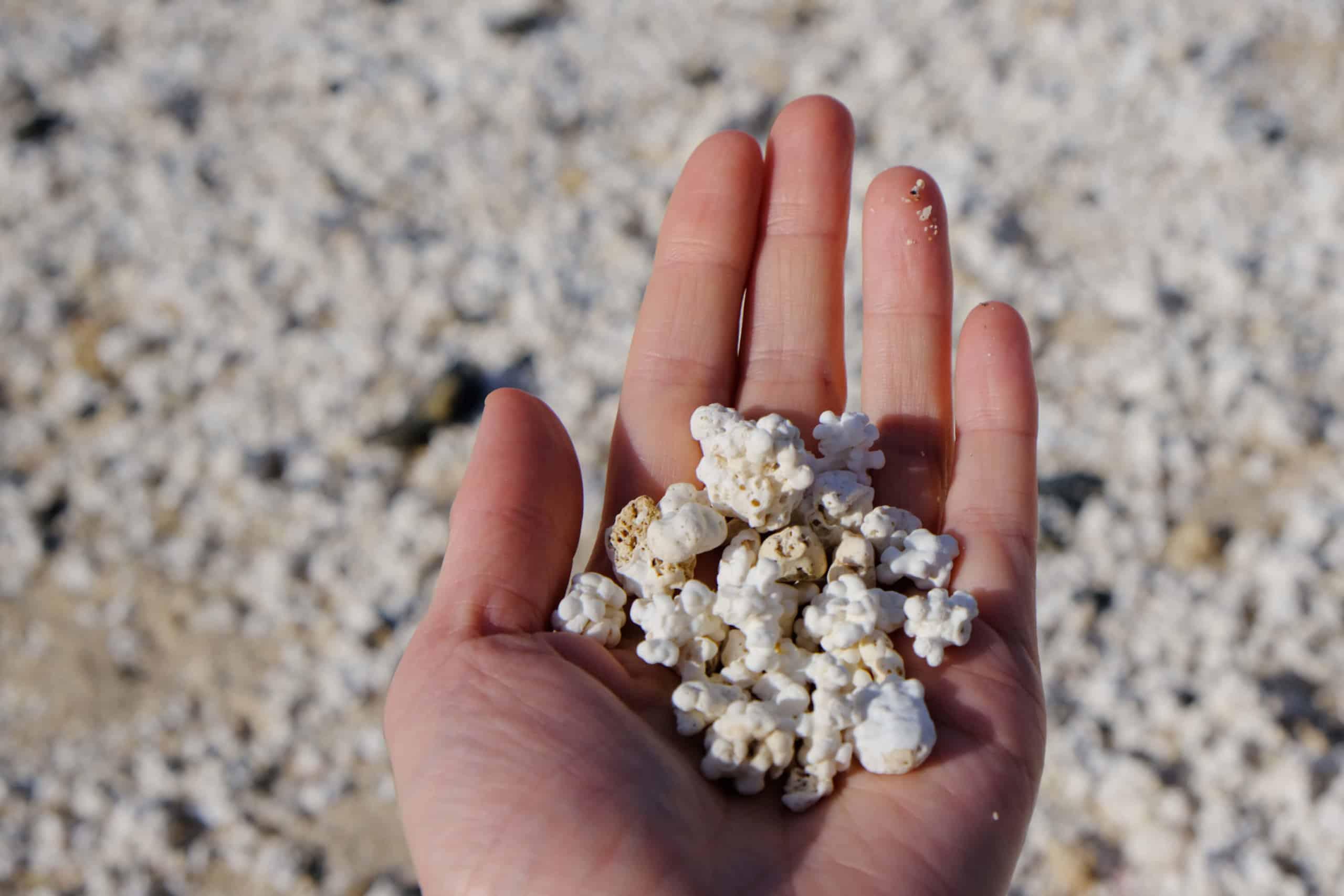 Korallen-Popcorn