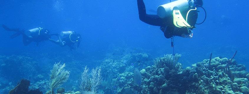 Die TUI Care Foundation stärkt Korallenriffschutz