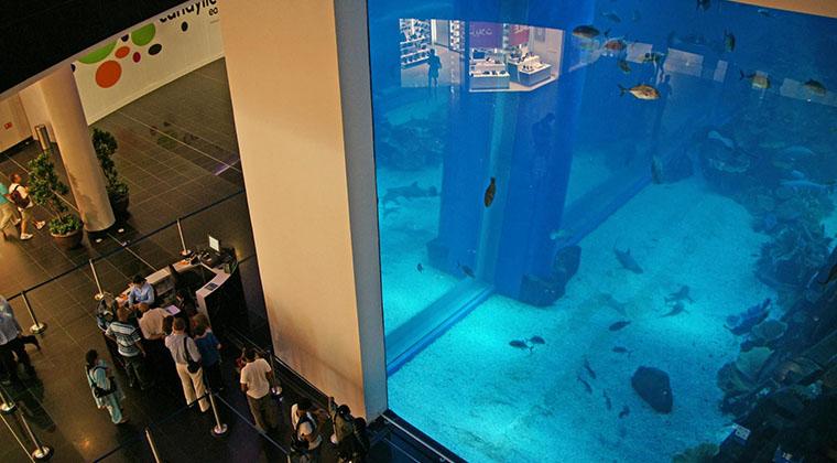 """Die Scheiben sind 75 Zentimeter dick: Das """"Dubai Aquarium"""" lockt zusätzliche Besucher in die """"Dubai Mall"""""""