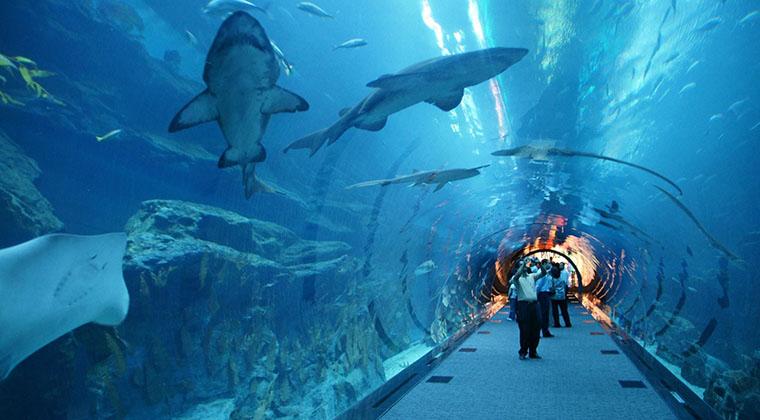 """Zehn Millionen Liter Wasser und 33.000 Meeresbewohner über dem Kopf: Ein verglaster Tunnel führt durch das """"Dubai Aquarium"""" im Mega-Einkaufszentrum """"Dubai Mall"""""""