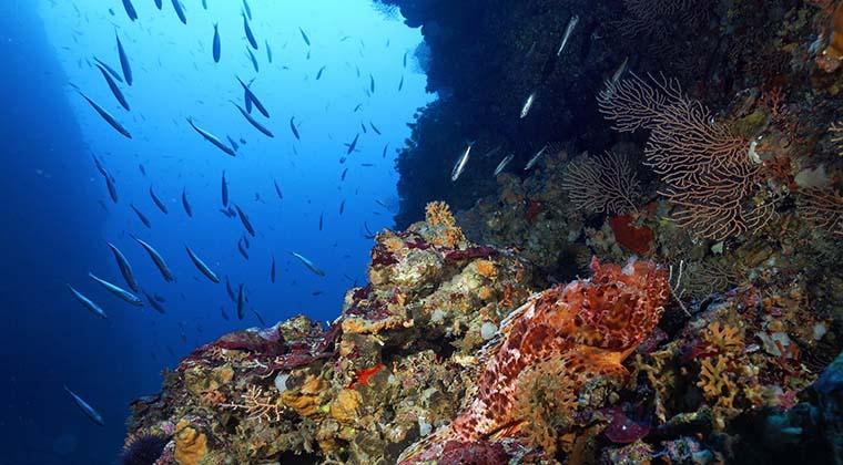 Bunte Korallengärten