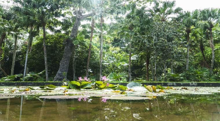 Mauritius Botanischer Garten Pamplemousses