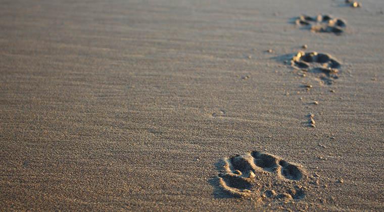 Hundepfoten im Sand