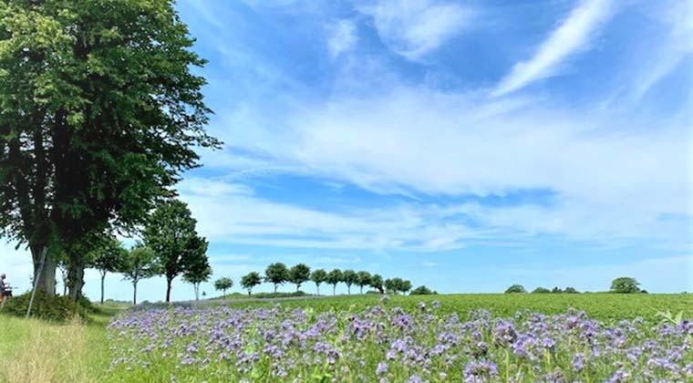 Mit dem Rad geht es vorbei an hübschen Feldern