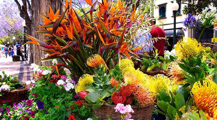 Blumen auf dem Blumenfestival