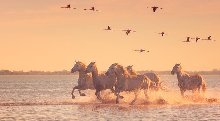 Pferde und Flamingos! ©Shutterstock/Uhryn Larysa