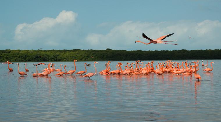 Mexiko Yucatan Celestun rosa Flamingos