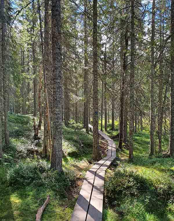 Weg im Nationalpark Skuleskogen