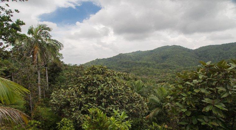 Nationalpark Vallee Mai Seychellen