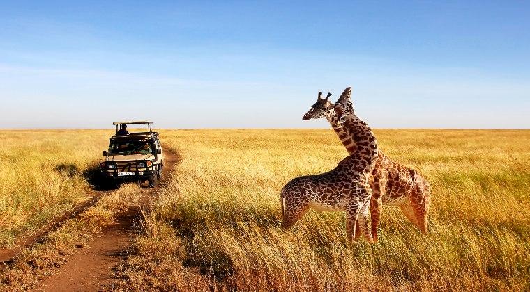 Afrika Tansania Giraffen Urlaub 2021