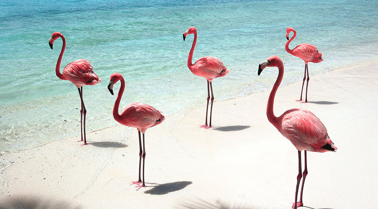 Flamingostrand Aruba