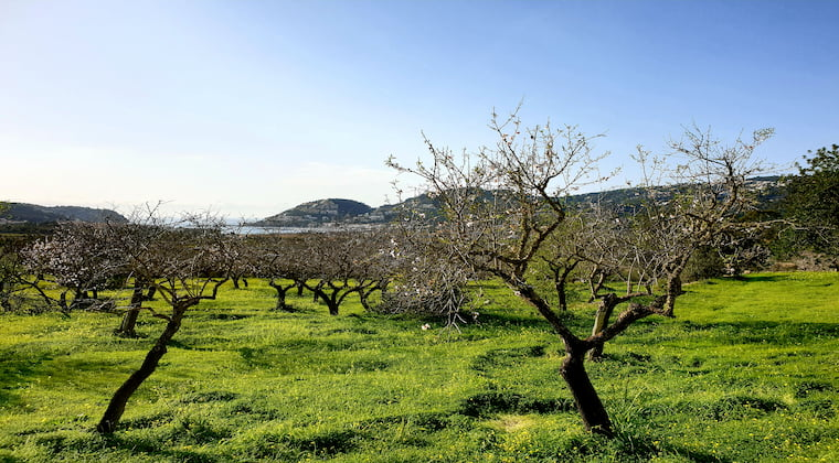 Wanderweg Andratx Mallorca