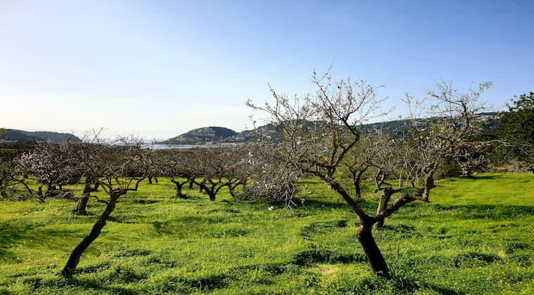 Wandern auf Mallorca nähe Andratx