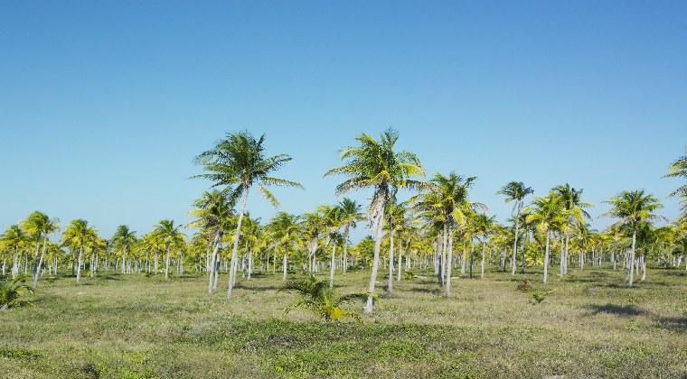 Nationalpark Desembarco del Granma auf Kuba