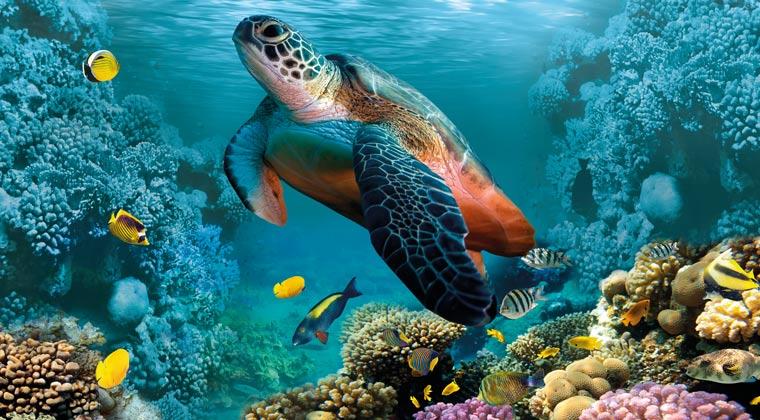 Schildkröte mit Fischen im Meer