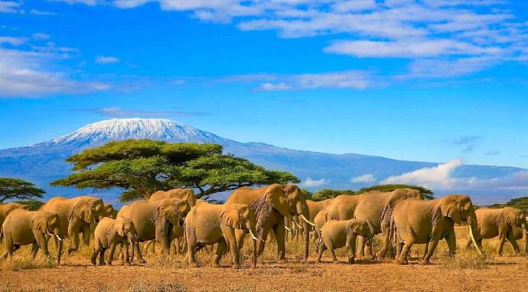 Safari Reise Afrika Elefantenherde