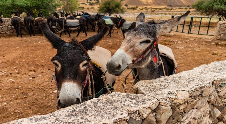 Bauernhof in Kelokedra auf Zypern