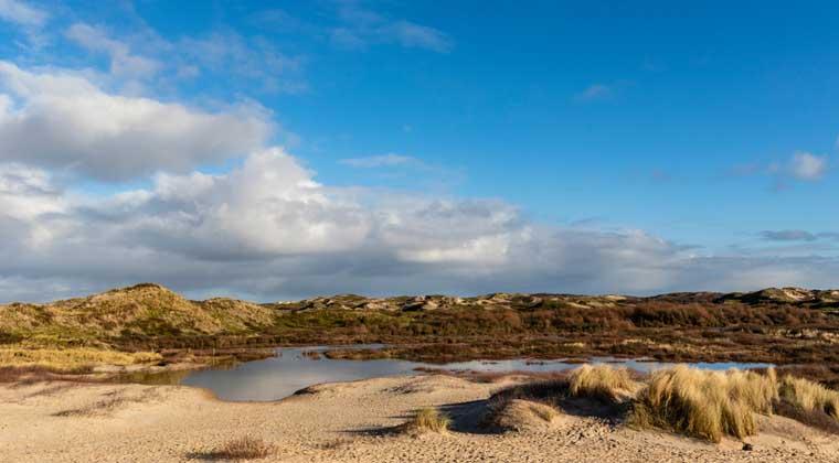 Blick auf die Dünen in Bergen aan Zee