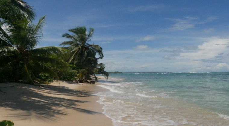 Panama Strand mit Palmen