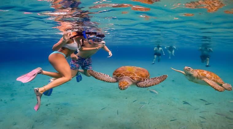 Tauchen mit Meeresschildkröten auf Klein Curacao
