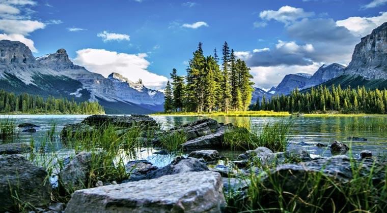 nationalparks kanada jasper Bäume am Fluss