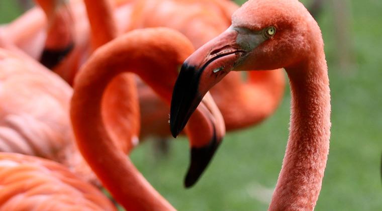 Zoos in Deutschland rosa Flamingos