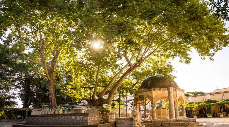 Insel Kos Der Baum des Hippokrates