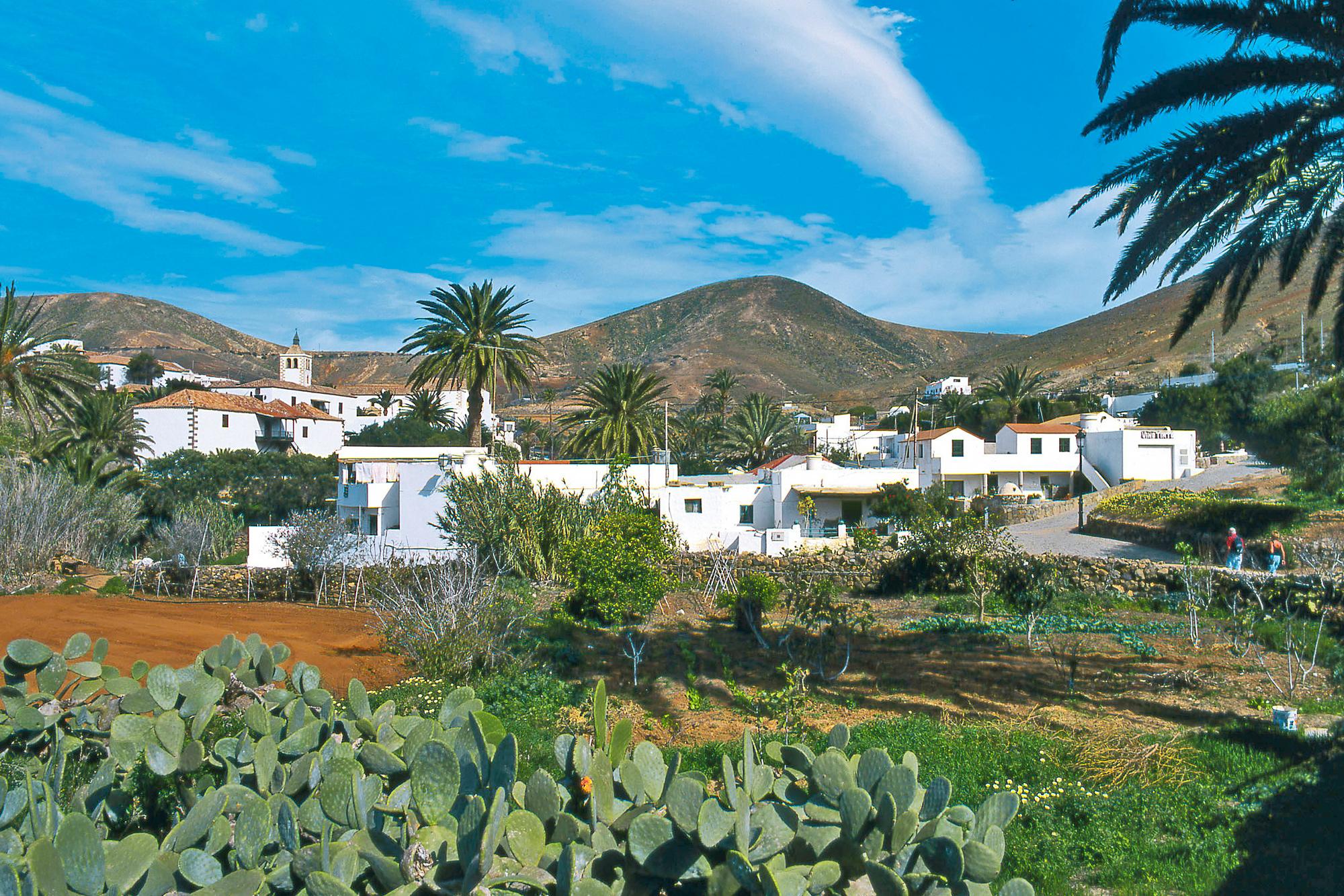 Last minute fuerteventura mit tui spontan auf die kanaren for Moderne hotels kanaren