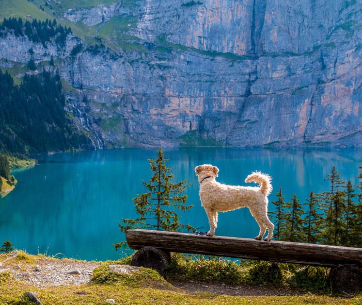 urlaub auf juist mit hund urlaub mit hund hundefreundliche hotels