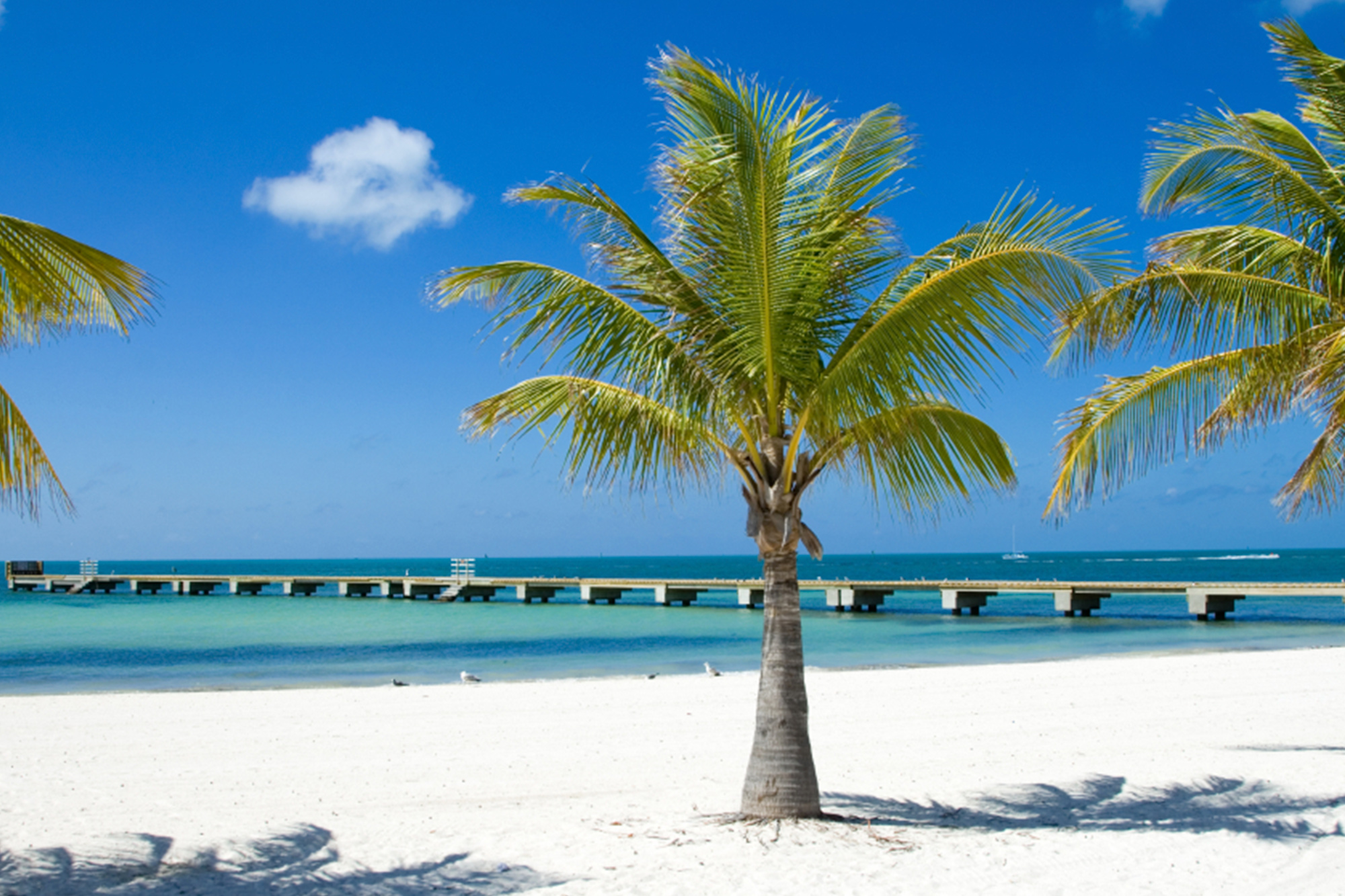 What Is The Weather In West Palm Beach Florida