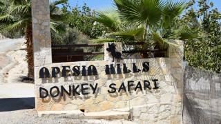Ein Esel kommt selten allein: Annica und Jo auf Zypern