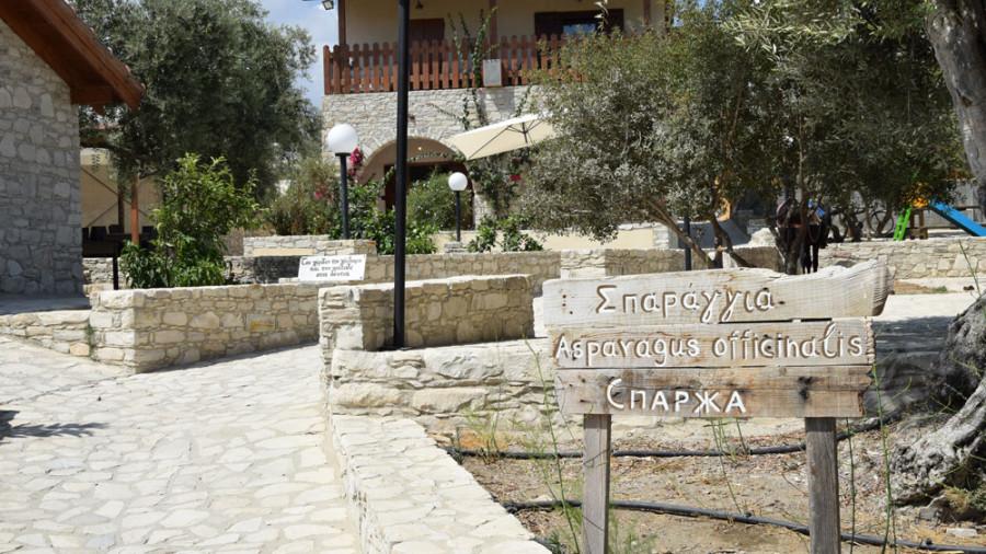 Golden Donkeys Farm auf Zypern